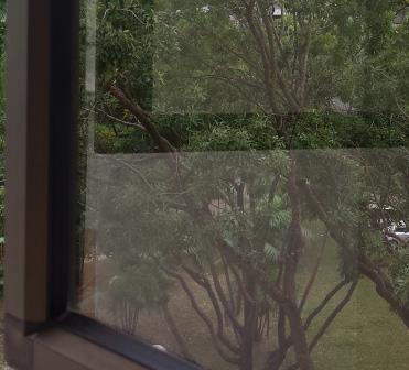 Sparkling Clean Windows!